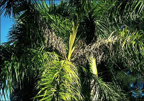 Deficiency of Manganese   Plant Nutrient Deficiency ...