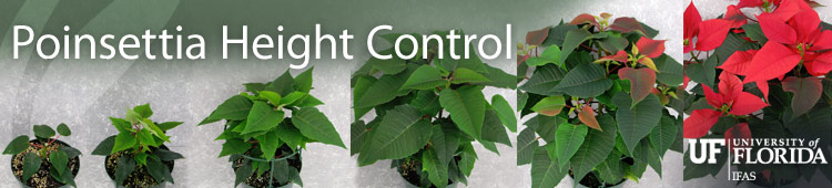 Poinsettia Height Control