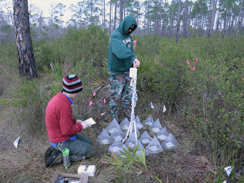 Master's student Amber Gardner and Dr. Pérez checking research plots within the Apalachicola National Forest.
