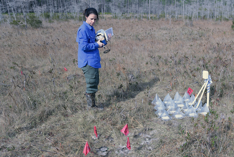 Seed burial experiment (foreground) and full-sun germination phenology study within a bog site.