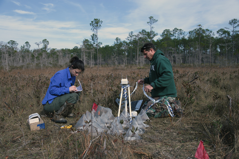 Full-sun experimental field plot in the bog site.