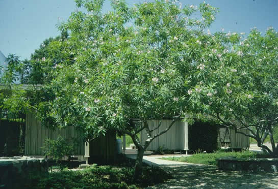 research papers the split cherry tree