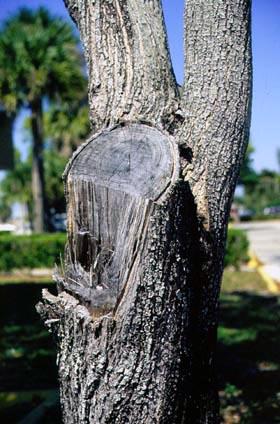 Pruning Cuts Pruning Landscape Plants Edward F