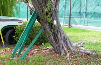 Storms Maintenance Landscape Plants Edward F Gilman