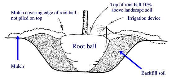 Planting Hole - Planting - Landscape Plants