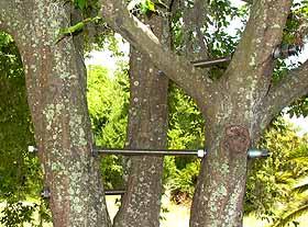 Cabling Storms Maintenance Landscape Plants Edward