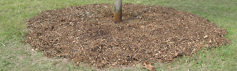 Mulch Should Be 3 Inches Deep
