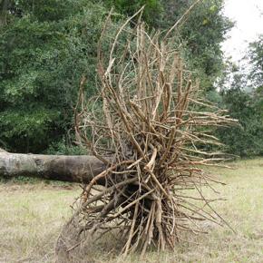 Improve Health Maintenance Landscape Plants Edward F Gilman