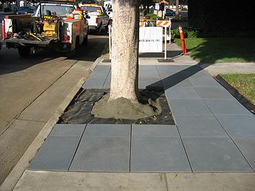 Sidewalks Urban Design Landscape Plants Edward F