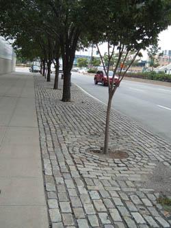 Street Trees Urban Design Landscape Plants Edward F